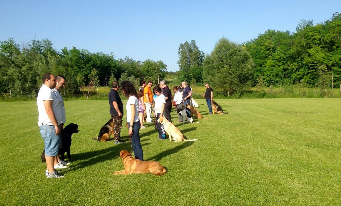 addestramento cani pescara educazione di base